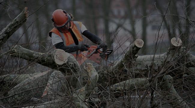 Homestead Tree Service